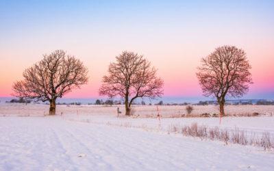 Winter Solstice Stillness