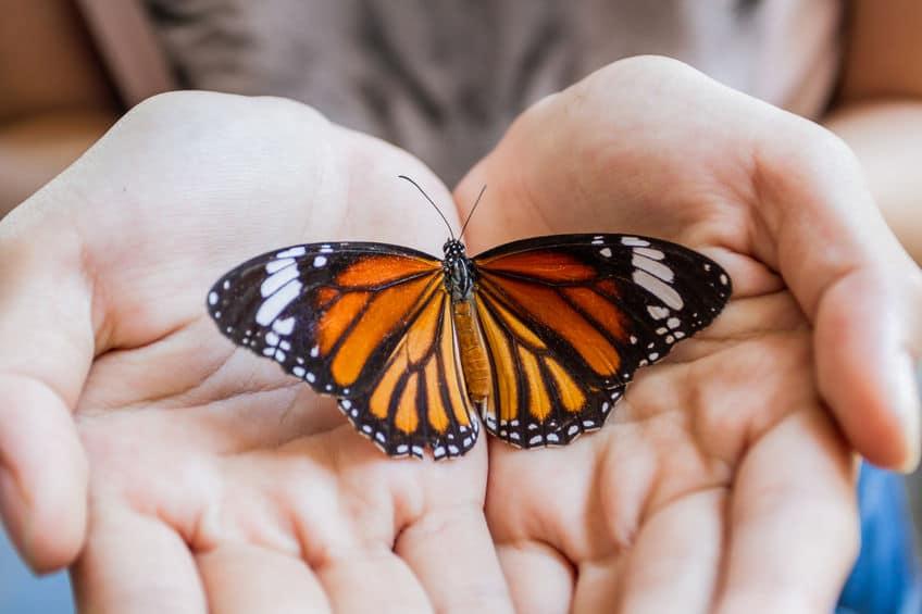 T3 butterfly